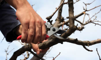 Tree Pruning in Littleton CO Tree Pruning Services in Littleton CO Quality Tree Pruning in Littleton CO