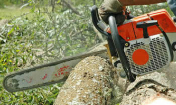 Tree Removal in Littleton CO Tree Removal Quotes in Littleton CO Tree Removal Estimates in Littleton CO Tree Removal Services in Littleton CO Tree Removal Professionals in Littleton CO Tree Services in Littleton CO
