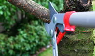 Tree Pruning Services in Littleton CO