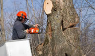 Tree Removal in Littleton CO